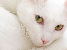 """""""If you want to know the character of a man, find out what his cat thinks of him."""" --Unknown Author"""