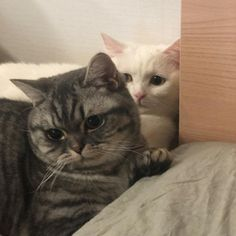 There is no doubt that cats are a popular choice for pets — in fact, in accordance with the American Veterinary Medical Association, more households in the U. have cats than dogs! I Love Cats, Cute Cats, Funny Cats, Animals And Pets, Baby Animals, Cute Animals, Amor Animal, Cat Aesthetic, Cute Creatures
