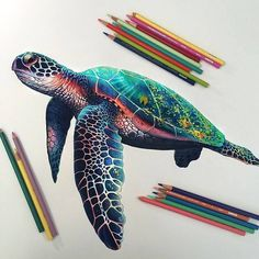 Impressive Realistic Color Pencil Illustrations From 22 Year Old