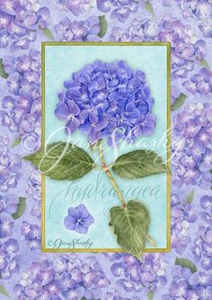 Florals  |   Jane Shasky