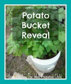 Can You Grow Potatoes in a Bucket? - Apartment PrepperApartment Prepper
