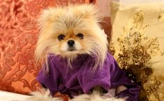 Giggy! Cutest dog ever! #RHOBH