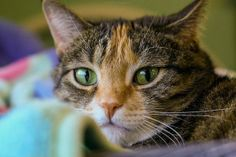 7 Ways To Curb Cat Shedding In Your Home
