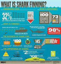 What is Shark Finning? #SaveSharks