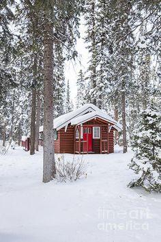 Cabin Fever by Evelina Kremsdorf