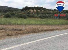 Ελιά (Μολάοι) Country Roads