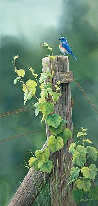 Bluebirds are my favorite birds! Pretty Birds, Love Birds, Beautiful Birds, Creation Art, All Nature, Tier Fotos, Wildlife Art, Bird Watching, Bird Art