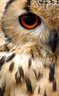 The elegance n beauty of a owl unsurpasses the danger they truly can posess ugh loooooove them!!