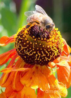 Bee Beautiful, Rio Rancho New Mexico