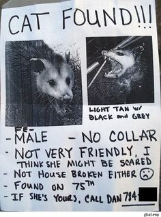 I think I have seen this cat on the road.