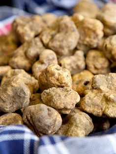 """Alba, Italy's famous white truffle—or """"Alba Madonna""""—is one of the world's rarest and most expensive. On Saturdays and Sundays from mid-October to mid-November, the finest chefs and culinary insiders flock to the small town for the Alba International White Truffle Fair."""