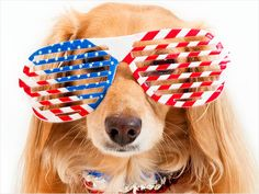 You have never witnessed cute until you have seen a dog in a tutu! These pets really know how to celebrate in style –check out these animals wearing glasses, hats, boas and more in these patriotic pet pictures below. European Flags, Fourth Of July, Bald Eagle, Puppy Love, Best Dogs, Animal Pictures, Cute Dogs, Red And White, Dog Cat