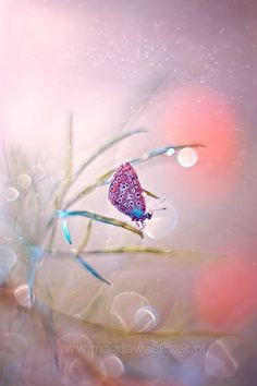 Pastel dreams by Magda Wasiczek on 500px