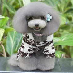 New Pet hoodie Lovely Soft Winter Warm Pet Dog Clothes Deer Dos Costume Clothing Jacket Teddy Hoodie Apperal Coat