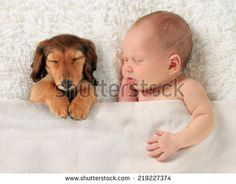 Newborn baby and a dachshund puppy sleeping together. - stock photo