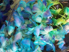 Singapore Orchids by Monique Barber, via Flickr