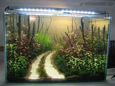 Freshwater Aquarium Plants, Tropical Fish Aquarium, Tropical Fish Tanks, Aquarium Fish Tank, Freshwater Fish, Fish Aquariums, Nano Aquarium, Tanked Aquariums, Aquarium Landscape
