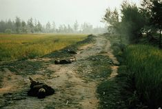 The bodies of Vietnamese civilians who were killed by U.S. soldiers rest on a road in My Lai, Vietnam, on March 16, 1968 3040 × 2047