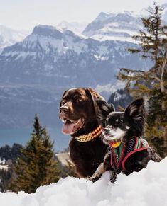 Youll always be my best pawfriend.. you know too much already! #carolinacorrodi #premiumdogfashion #dogfashionwithapurpose             #hunde #traumhund #9gagcute #cutedog #hundeaufinstagram #dogtraining #swissdogs #ladbible #chien #weeklyfluff #thedodo #instachien #dogsofinstagram #swissdog #petfluencer #dogblogger #hundefotografie #hundar #dogsofinsta #zurich #geneva #hund #dogwithamission #dogstagram #doglover #dogs #hundeliebe Dog Fashion, Zurich, Always Be, Geneva, Dog Training, Cute Dogs, Dog Lovers, I Am Awesome, Poses