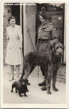 Wolfhound and Dachshund, UK.my 2 favorite dogs in one picture! Vintage Dachshund, Dachshund Love, Vintage Dog, Daschund, Dog Photos, Dog Pictures, Funny Photos, Baby Dogs, Dogs And Puppies