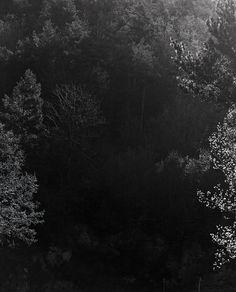 Awoiska van der Molen: Sequester-de-Awoiska-van-der-Molen-Tipibookshop-7.jpg 1.280×1.584 pixels