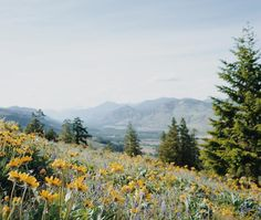 Afternoons were spent hiking through wildflower fields with snow-capped mountains in the distance #BTinWashington #livewashington #mytinyatlas