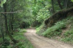 El camino de Santiago te transforma