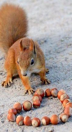 I made this for you... (*Feelin' Squirrely group board*)