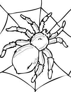 Spider Coloring Pages Printable - Coloring For Kids 2019 Ladybug Coloring Page, Spider Coloring Page, Insect Coloring Pages, Halloween Coloring Pages, Animal Coloring Pages, Coloring For Kids, Printable Coloring Pages, Coloring Pages For Kids, Coloring Books