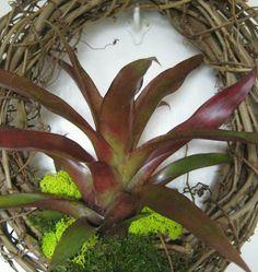 Maroon Tillandsia Wreath