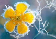 There are five types of frost: ground frost, air frost, hoar frost, glaze and rime.