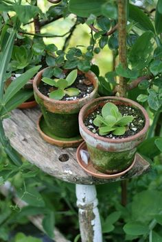 so pretty, love the little piece of an old chair to hold small pots! Tucked in a flower bed!