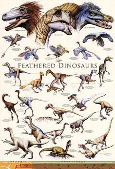 dinosaurs with feathers
