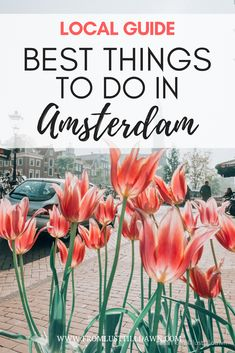 Want a local's perspective on the best things to do in Amsterdam? Follow this list and you'll enjoy a well-rounded trip of both local and touristy experiences. These are the exact things I do with my friends and family when they visit! | PIN FOR LATER | #amsterdam #amsterdamtravel #amsterdamphotography #amsterdamthingstodoin