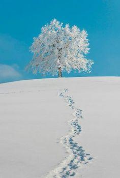 Appenzellerland - Danielle Garnett - - Appenzellerland winter…love our bright blue skies…cold enough to freeze your nostrils shut but, pretty… I Love Snow, I Love Winter, Winter Snow, Winter White, Winter Christmas, Snow White, Winter Walk, Winter Photography, Nature Photography