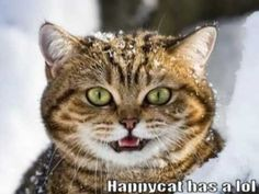 Very Funny Cats 44 -  #animals #animal #pet #cat #cats #cute #pets #animales #tagsforlikes #catlover #funnycats  Learn how to speak cat! Click HERE for the cat bible! Yay it is caturday!  I can has cheezburger rules!–  LOLcats will rule the world and there will be no more violence and war on this planet.Fun... - #Cats