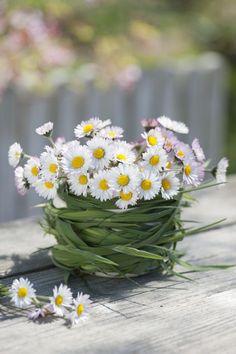 Gänseblümchen in Vase flowers in vase Frühlingsdeko mit Bellis Flowers Nature, My Flower, White Flowers, Flower Power, Beautiful Flowers, Daisy Flowers, Simple Flowers, Flowers Garden, Wedding Flowers