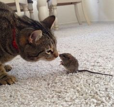 Litte Mouse Whispers to Cat