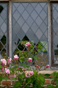 Climbing hybrid tea rose (Rosa Meg) on a brick wall in front of leaded glass window, England, early summer