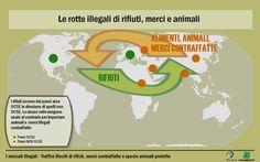 (12/02/2013) I traffici globali illegali di rifiuti, merci contraffatte e animali. Lo slideshow completo qui --> http://www.slideshare.net/legambienteonlus/mercati-illegali-16484318