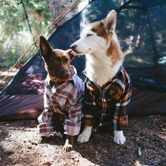 Dogs and flannel, two of my favorite things!