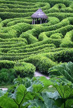 The maze at Glendurgan Garden ~  Falmouth, Cornwall