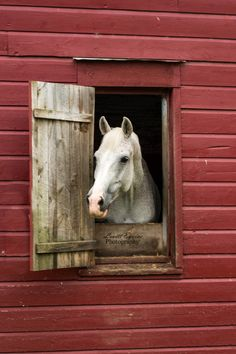 1000 Images About Horse Barns Amp More On Pinterest Horse