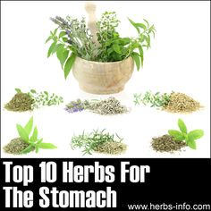 Top 10 Herbs For The Stomach