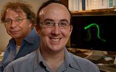 Fred Hutch researchers Drs. Roger Brent (left) and Alexander Mendenhall have developed a technique to measure carefully, for the first time, gene activity within single #cells in a live, adult animal. Photo by Bo Jungmayer / Fred Hutch News Service #research #science #scientist #cancer #fredhutch #fredhutchinson #gene