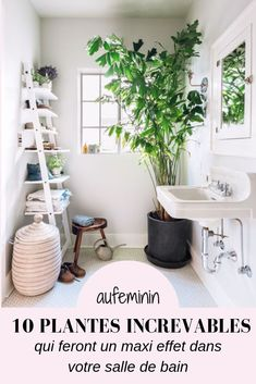 10 Really Big Plants You Can Grow Indoors Large Indoor Trees That Make a Bold Statement Indoor Plants For Bathroom, Large Indoor Plants, Indoor Trees, Big Plants, Indoor Planters, Hanging Planters, Flowering Plants, Growing Plants, Potted Plants
