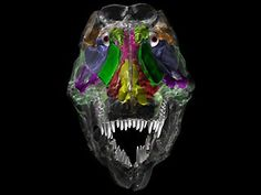 Research Proves that Dinosaurs were Airheads