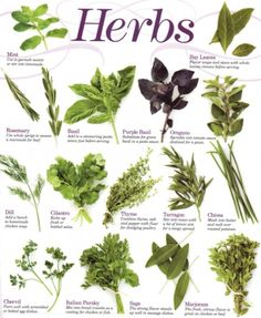 Last winter I grew a few herbs in pots, a test group to see how well I could grow them and how much I would use them. This year I've found myself cooking more and more with fresh herbs and using other fresh ingredients to flavor our meals rather...