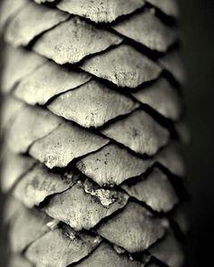 armor.  pine cone.