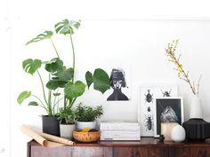 pflegeleichte Zimmerpflanzen dekorieren das Sideboard